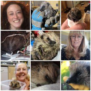 Hedgehog hero Catherine Jones